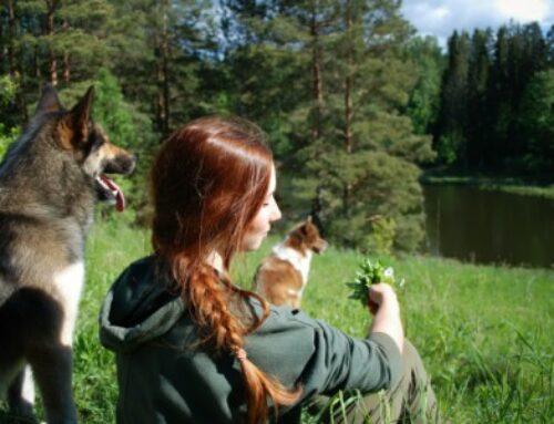 Teekond koertetreeneriks saamiseni