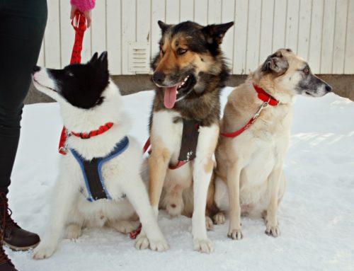 Kuidas valida koeratreenerit või koertekooli?