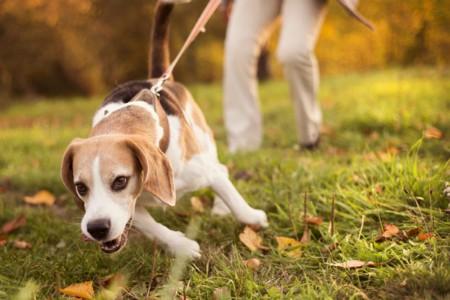 """Kaitstud: Koolitus """"Koeraga jalutamine ilma tirimiseta"""""""