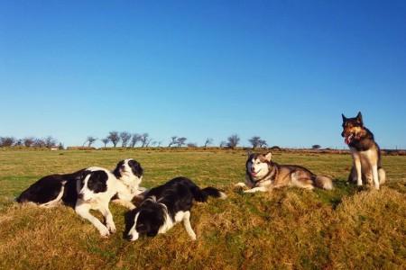 113 päeva koeraga Suurbritannias I osa
