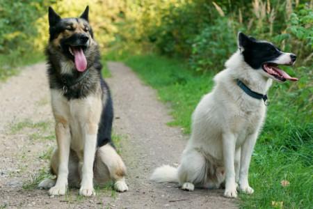 Kaitstud: Koera kodune kasvatus