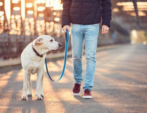 """Praktiline koolitus: """"Koeraga jalutamine ilma tirimiseta"""""""